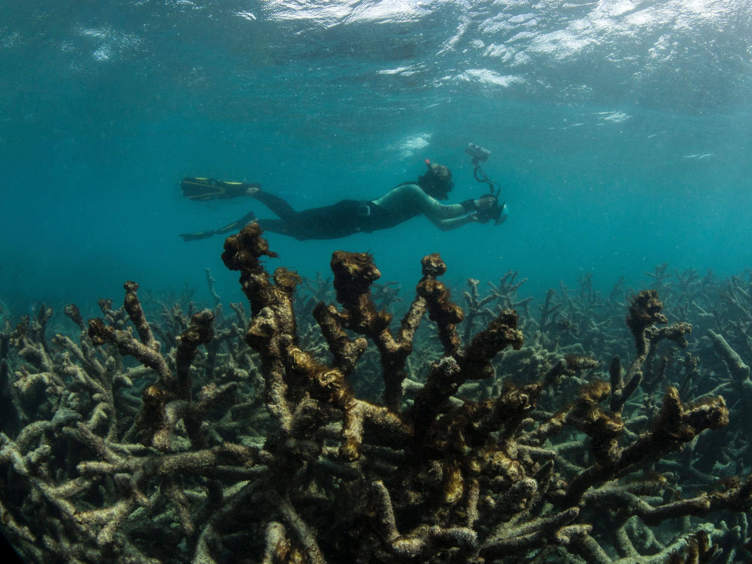 great barrier reef may no longer be salvageable australian