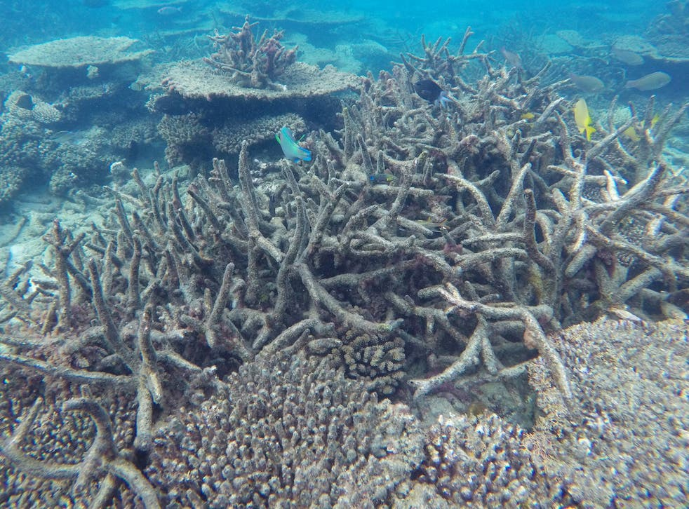 The authors estimate that the reef is worth A$29bn to tourism and has a brand – or indirect – value of A$23.2bn
