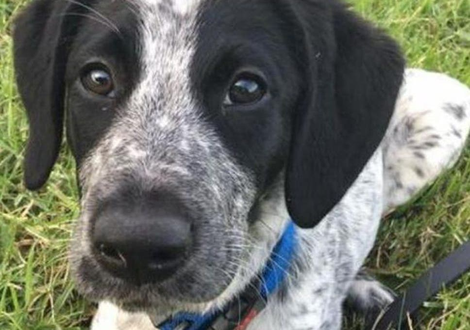 Grizz the sniffer dog should never have been shot after escaping at