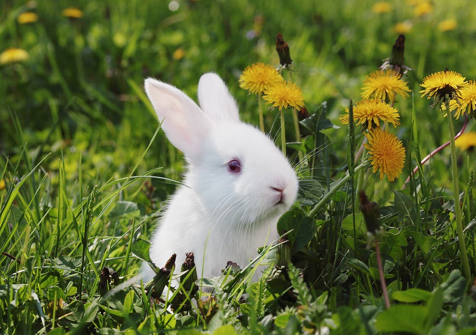 Pets shops across UK ban sale of rabbits during Easter | The