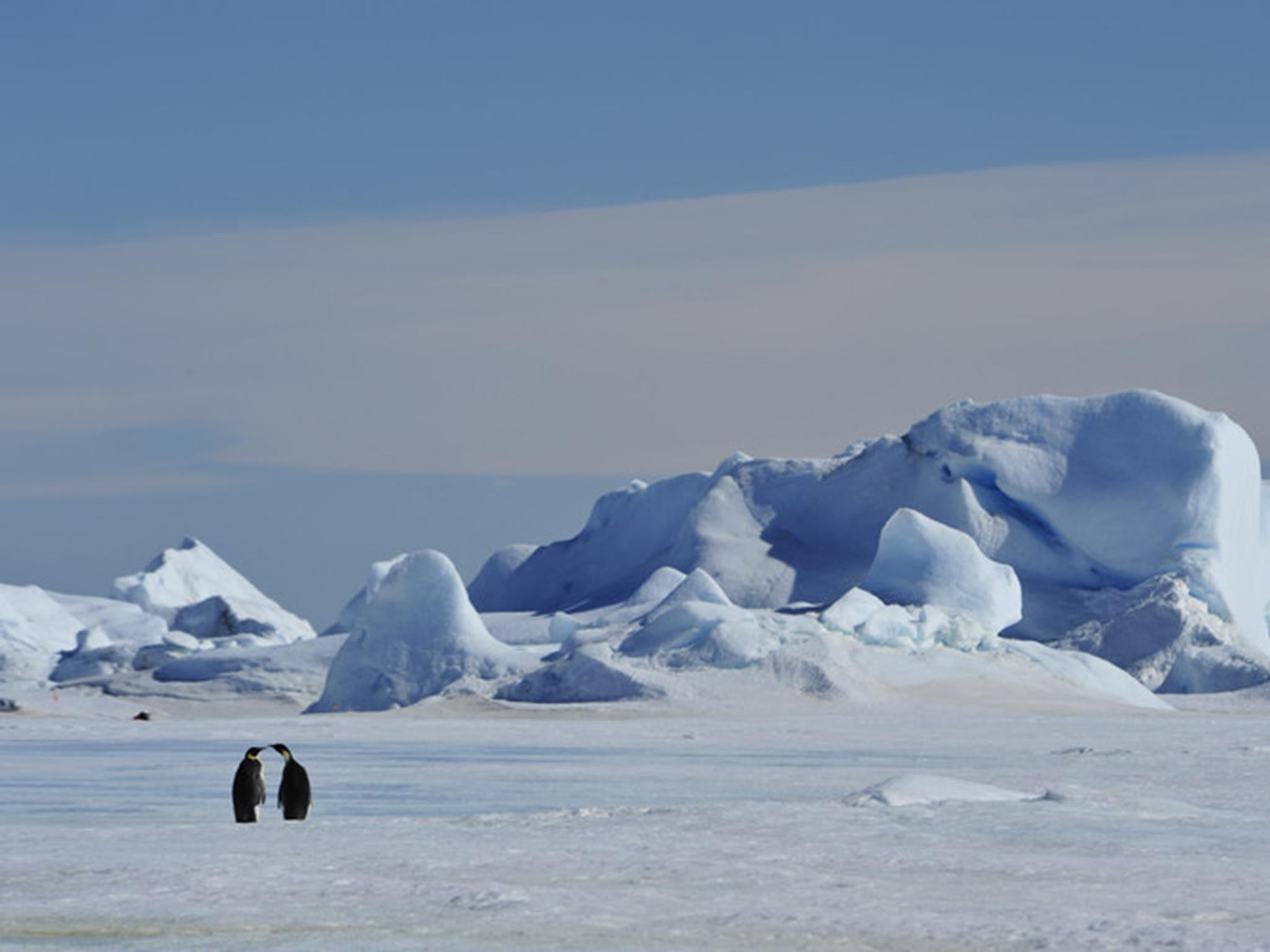 Sea ice 'to vanish from Arctic Ocean as region warming twice as fast as rest of world'