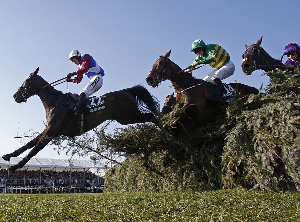 <p>At least 2,275 horses have died on British race courses since 2007</p>