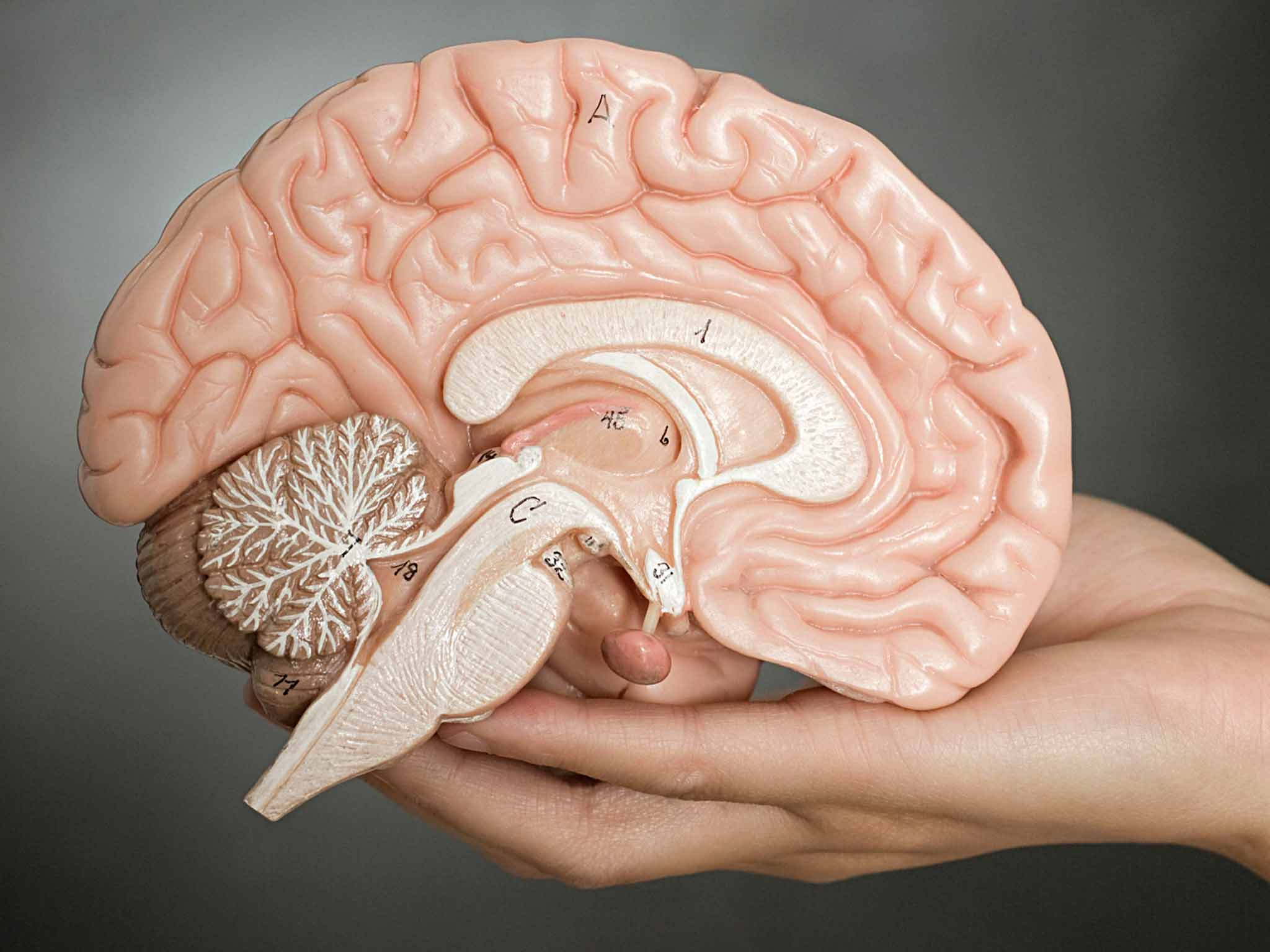 'Mind-blowing' discovery could revolutionise our understanding of how brain works
