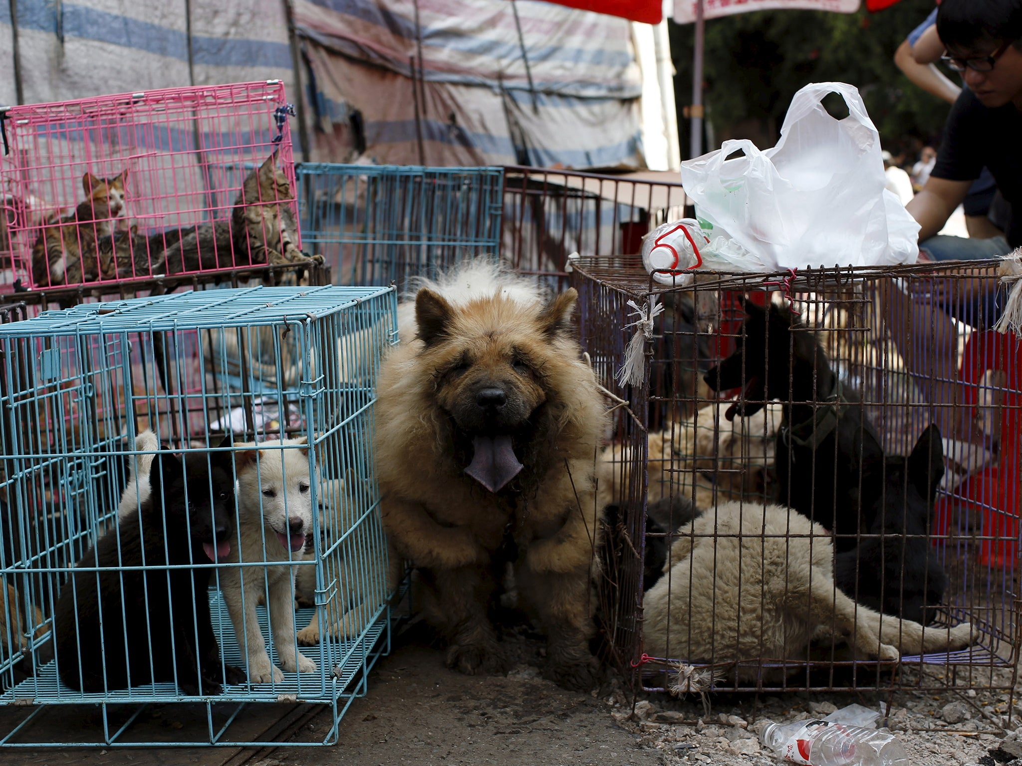 Taiwan becomes first Asian state to ban dog and cat meat ... - photo#36