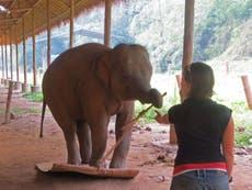 Elephants pass 'profound' test of their intelligence