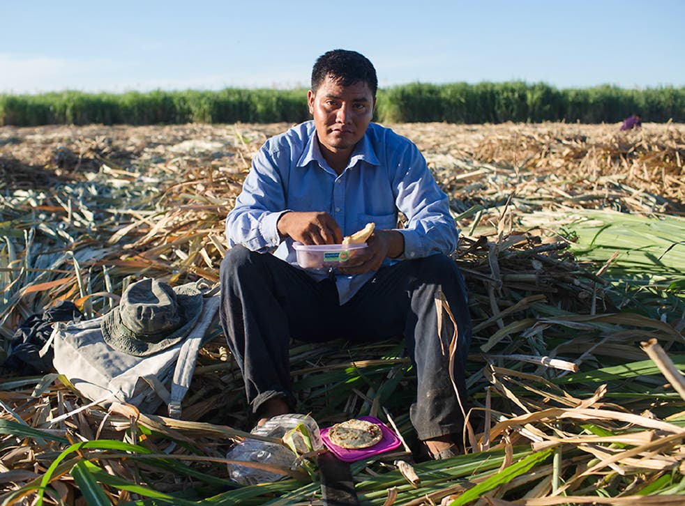 A man rests during the harvest of a sugarcane field in San Marcos Lempa, El Salvador, where dehydration is threatening the lives of thousands
