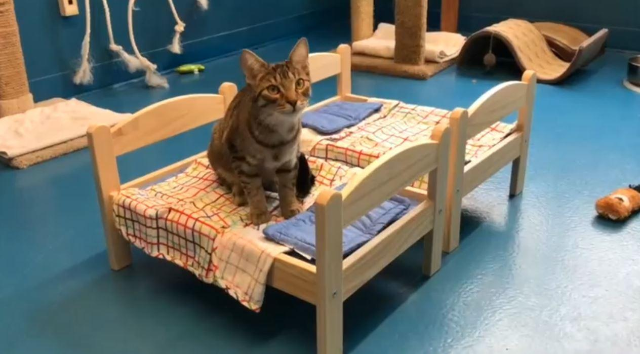 Ikea Have Beeing Donating Cosy Doll Beds For Cats At An Animal