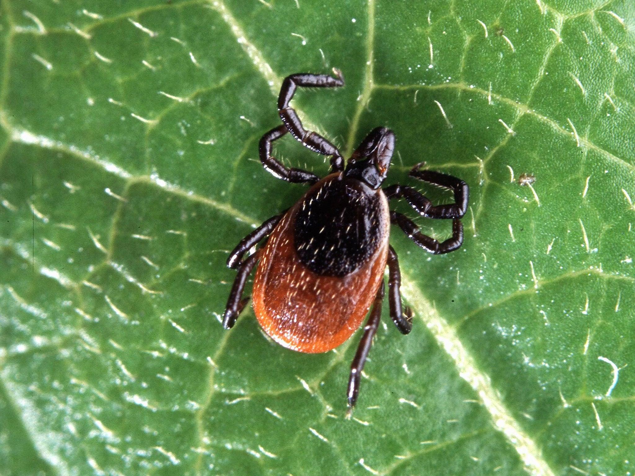 Insect killers: tick-borne encephalitis