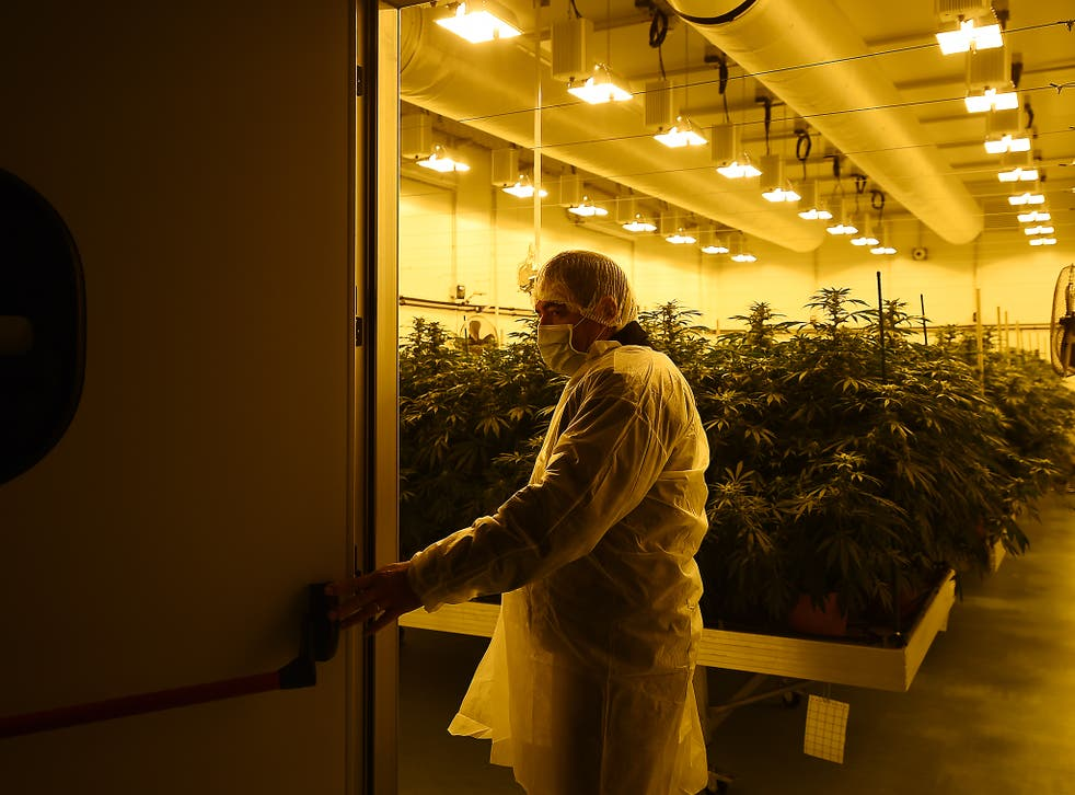 Tobacco firm knowledge of crop farming and distribution might mean they will seek to enter the cannabis market