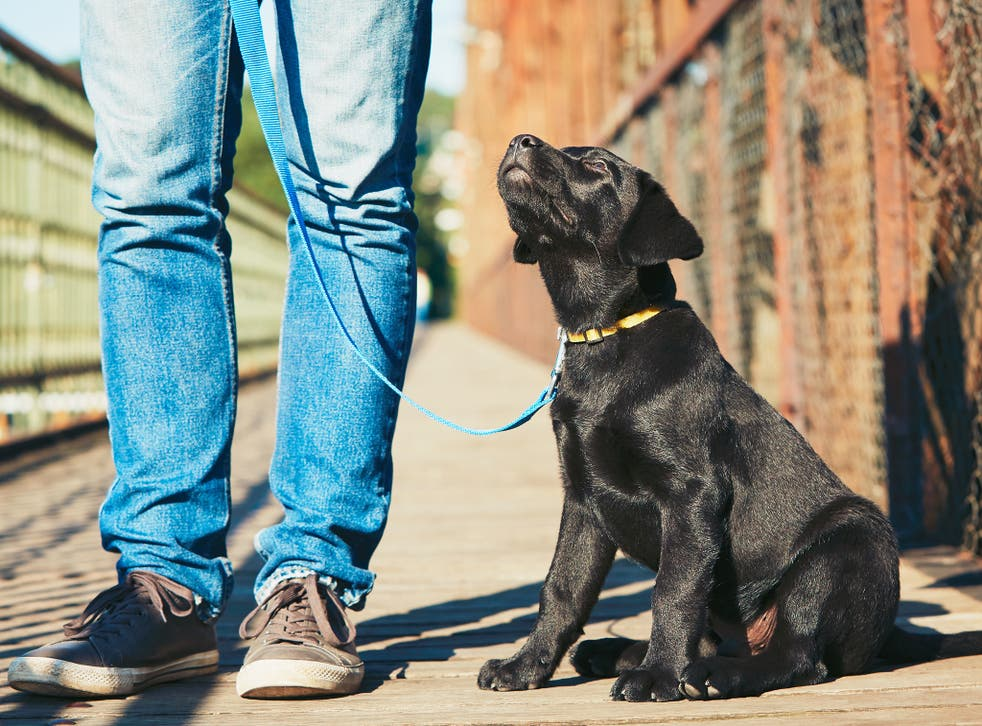 Dog walkers could also face fines if they do not carry something to clean up after their pet