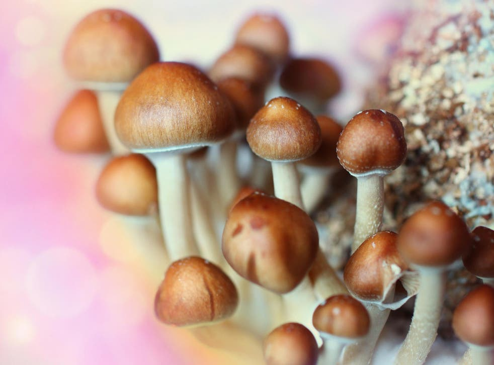 A chemical in magic mushrooms could be used to treat mental illness