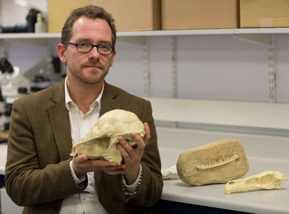 Dr Nick Longrich of the University of Bath with the jaw bone of a Chenanisaurus barbaricus, one of the last dinosaurs living in Africa before their extinction 66 million years ago, which has been discovered in a phosphate mine in northern Morocco