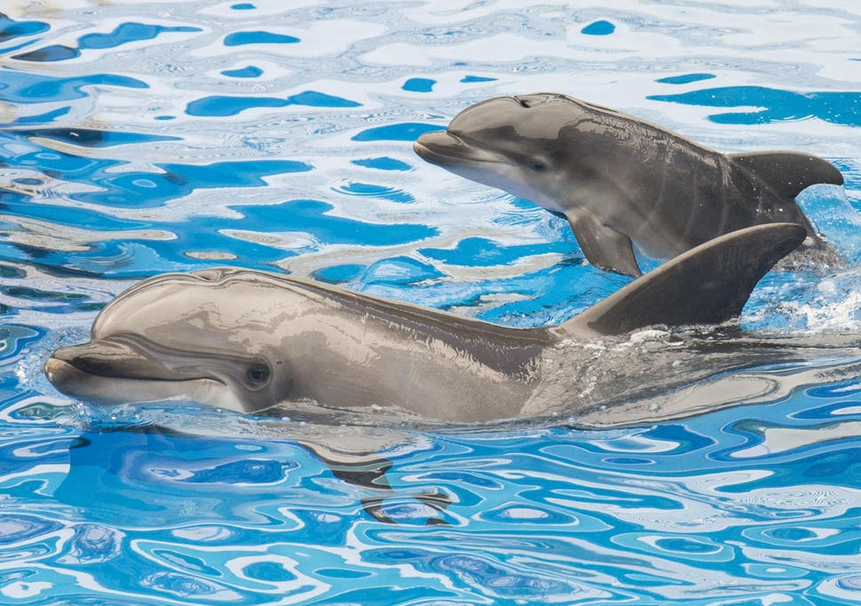 Scientists once gave dolphins LSD in attempt to communicate with ...
