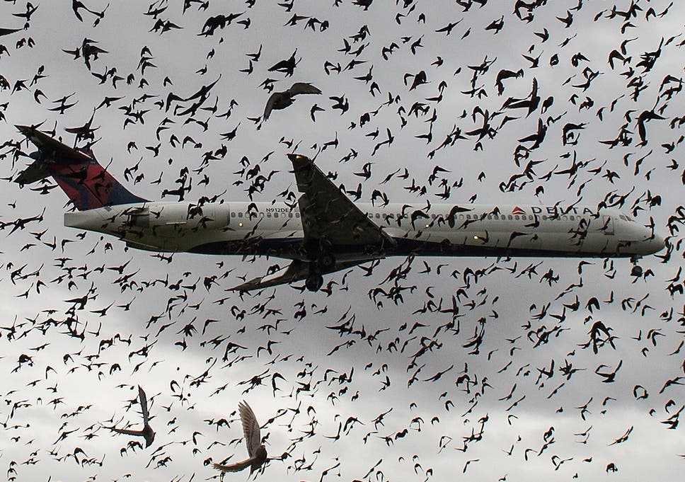 What happens when a bird strikes a plane? | The Independent