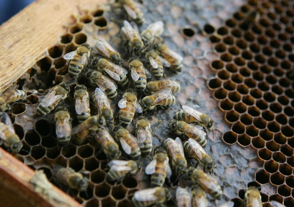 Nicotine-based pesticides harm bees despite corporations