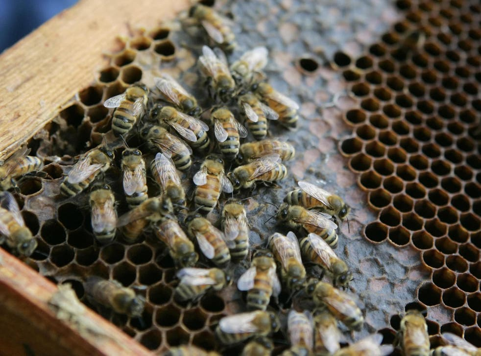 Honey bees walk on a hive