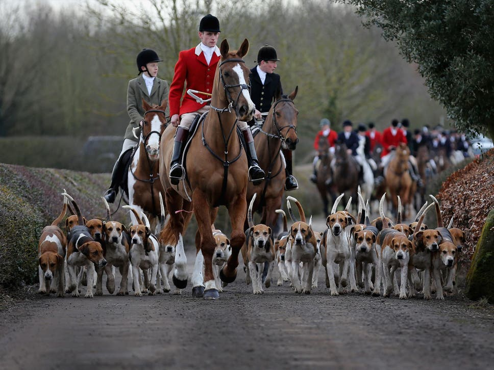 POLL: Should the Tories be allowed to bring back fox hunting?