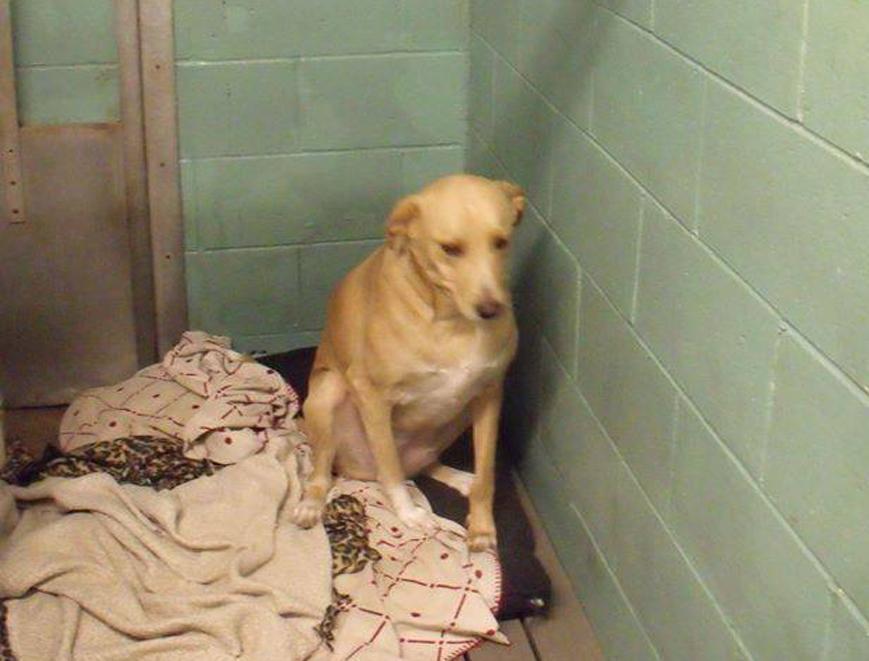 Lana The Saddest Dog In The World Adoption