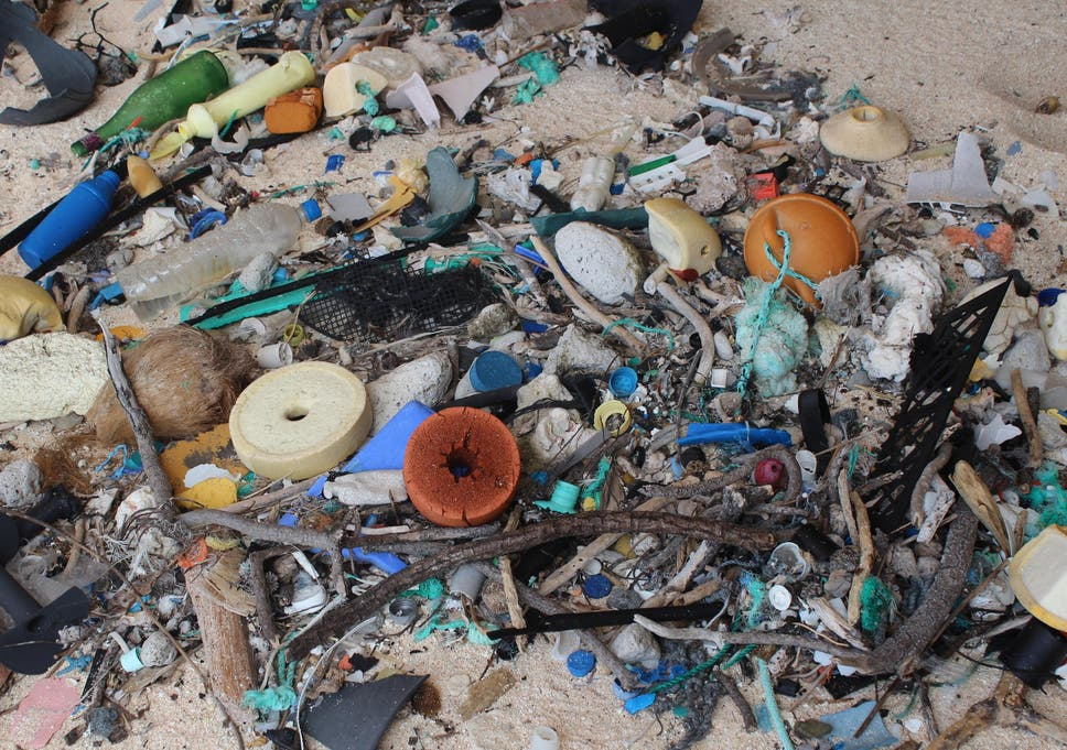 Plastic microparticles found in flesh of fish eaten by humans | The