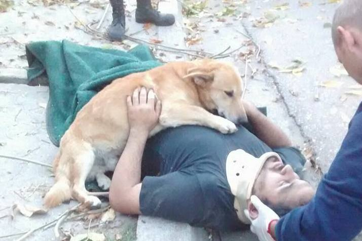 Dog refuses to leave unconscious owner while waiting for paramedics