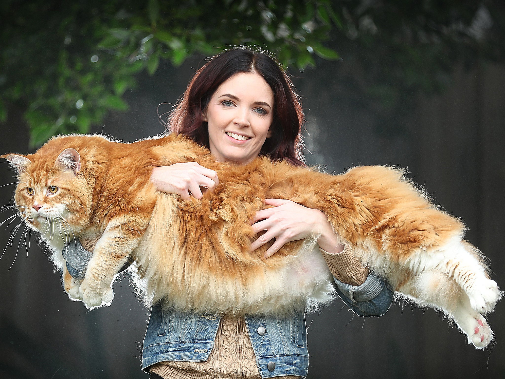 worlds longest cat in bid for record recognition the independent