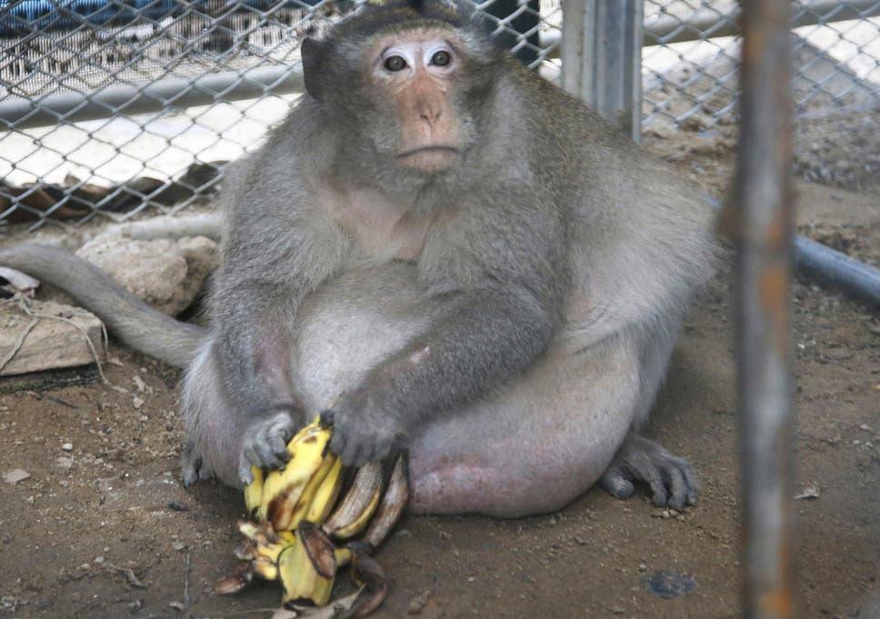 slaves-girlfriend-now-chubby-teens-nonude-chubbygobad