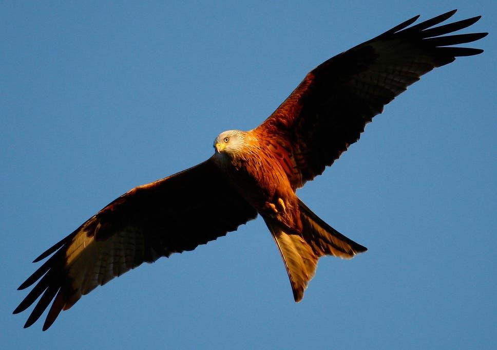 Shocking declines in bird numbers show British wildlife is 'in