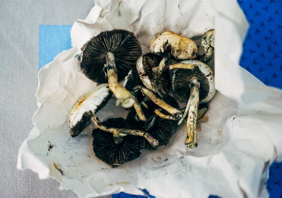 Magic mushrooms the safest recreational drug, says study