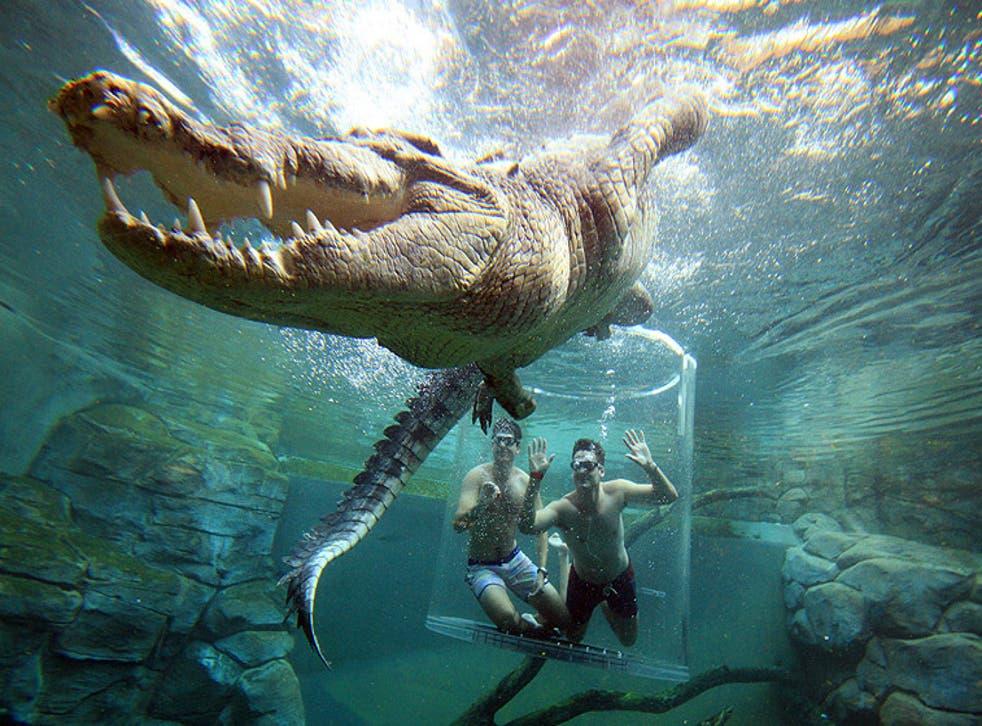 Crocosaurus Cove lowers tourists into a crocodile enclosure