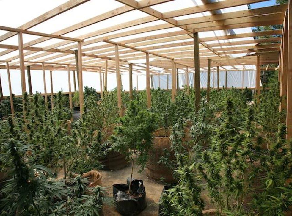 Hayfork, California has become a hub for marijuana growers