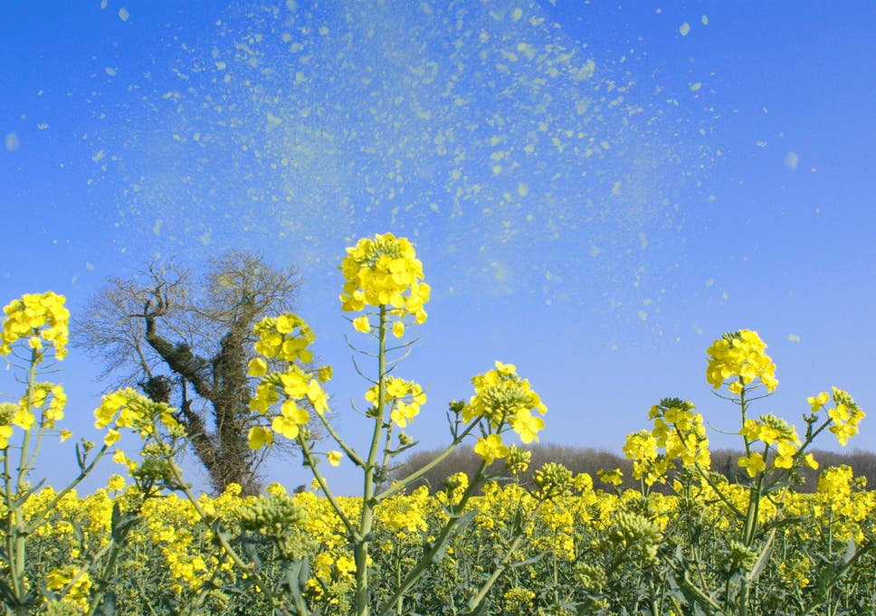 One in five hay fever sufferers take time off work because