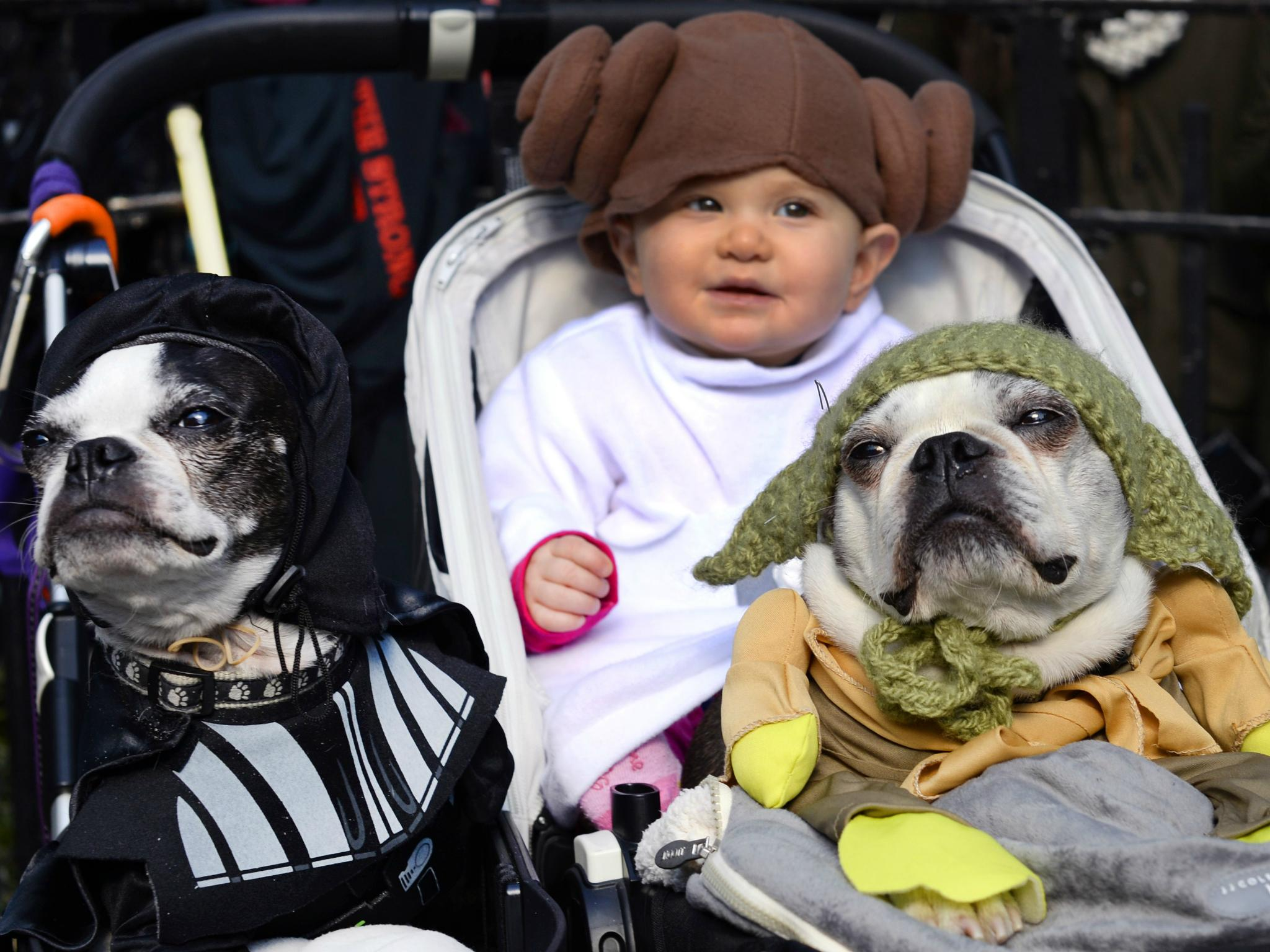 Living with dogs can help protect babies from range of illnesses like asthma