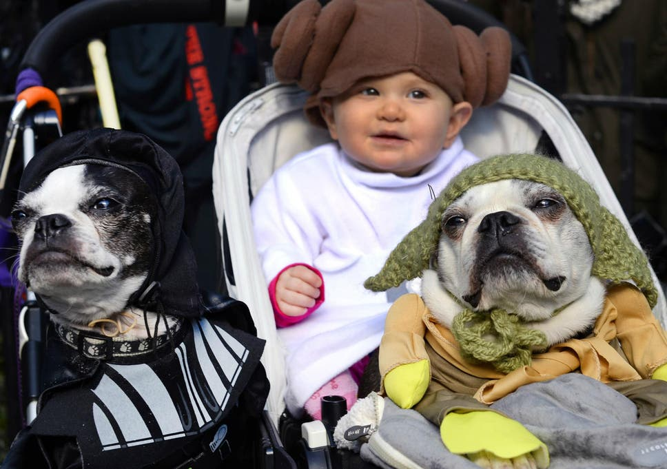 living with dogs can help protect babies from range of illnesses