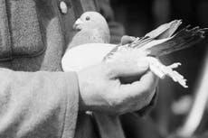 The pigeons of Passchendaele
