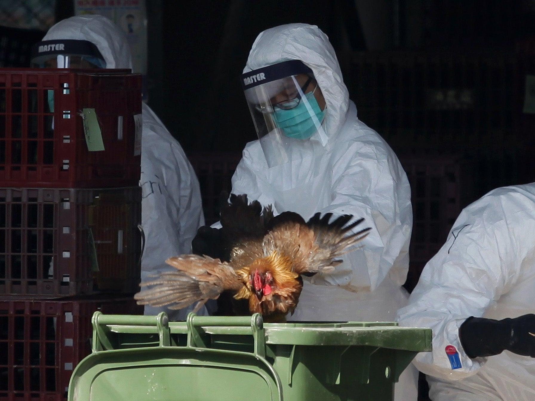 Bird flu outbreak in bangalore dating