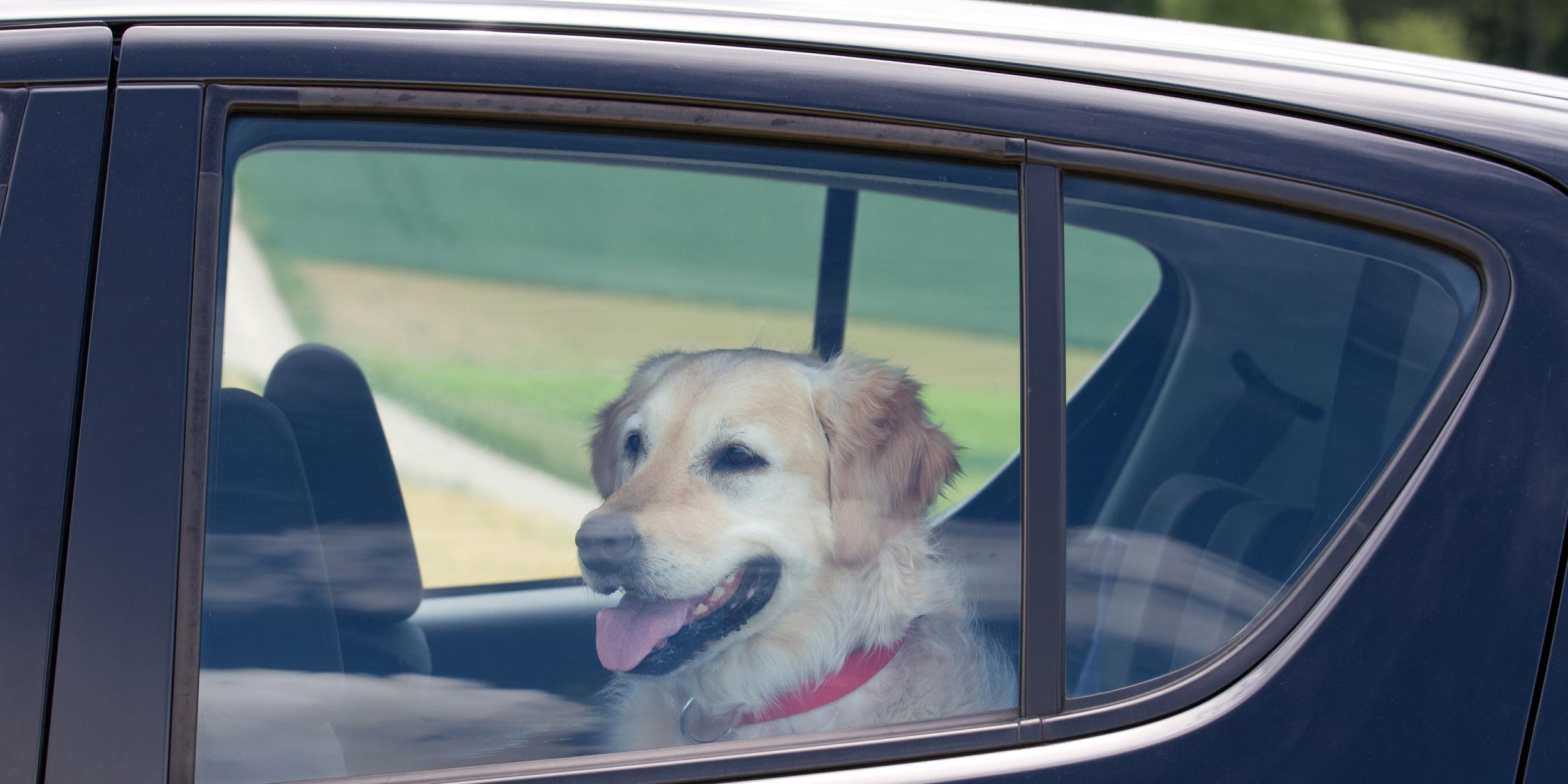Image result for dog in a car