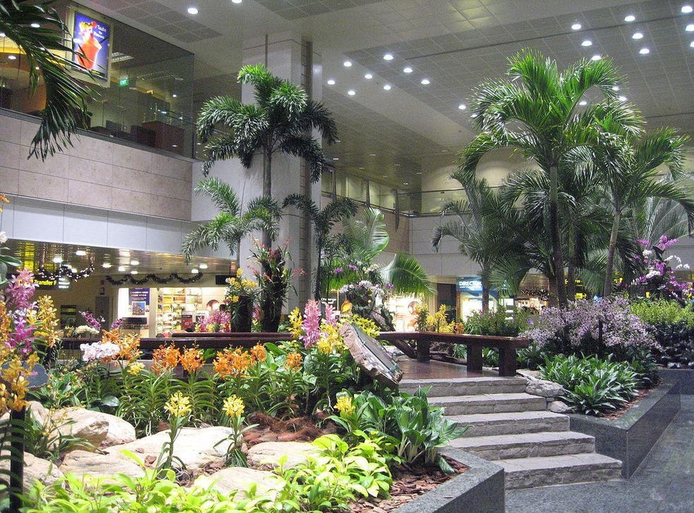 Not your average airport: Changi has garden areas with koi carp ponds