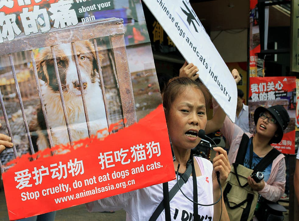 Animal rights activists protest outside a dog meat restaurant in Yulin