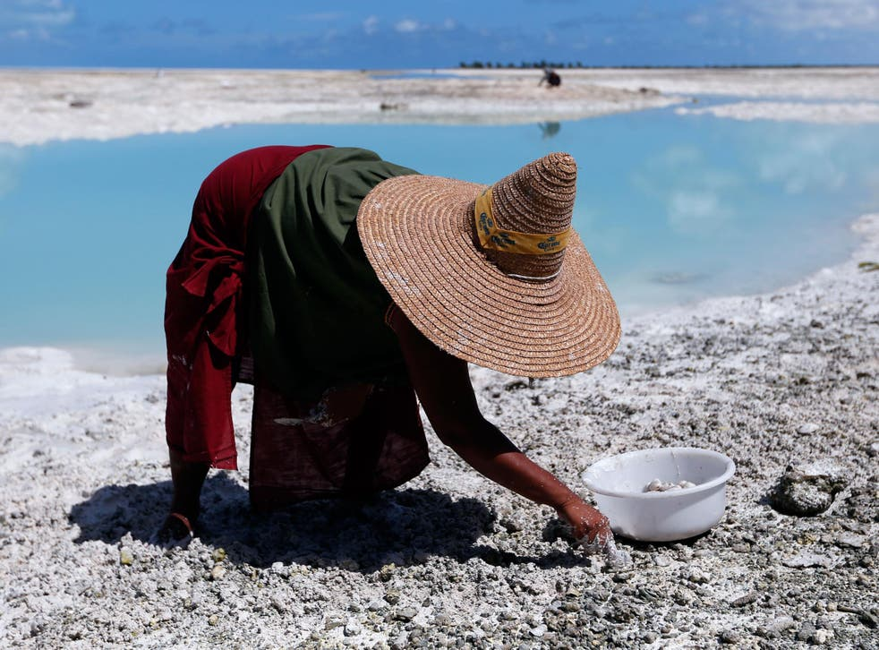 A woman digs for shellfish on the Pacific island of Kiribati, the country expected to be the most vulnerable to climate change's effects on fisheries