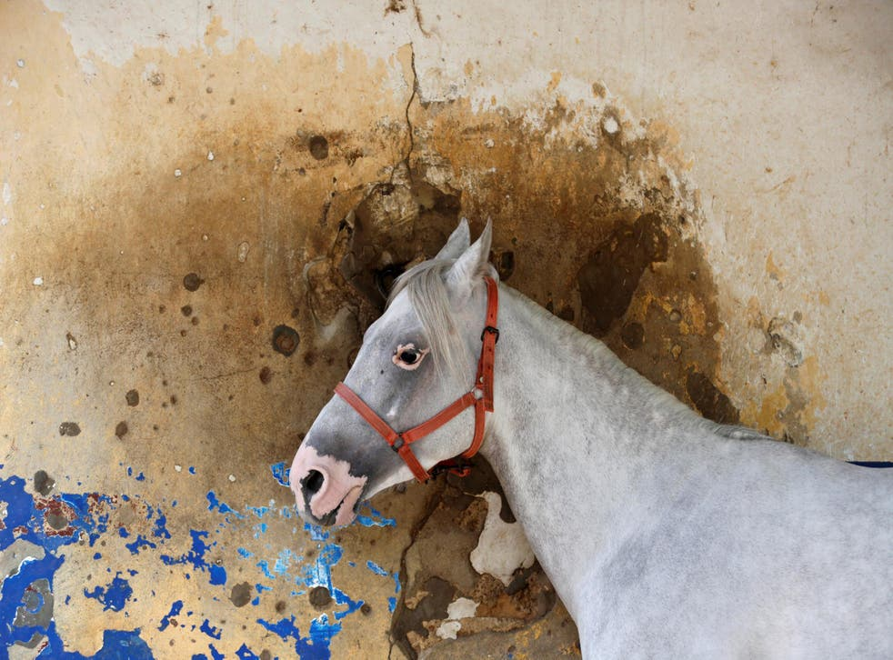 A horse by a bullet-riddled wall at the racetrack in the Lebanese capital