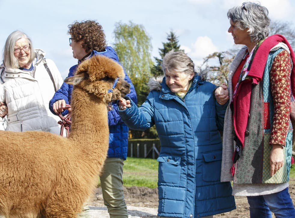 Dementia patients and their helpers visit an alpaca farm as therapy. In 2015, the condition claimed more than 61,000 lives and accounted for 11.6 per cent of recorded deaths