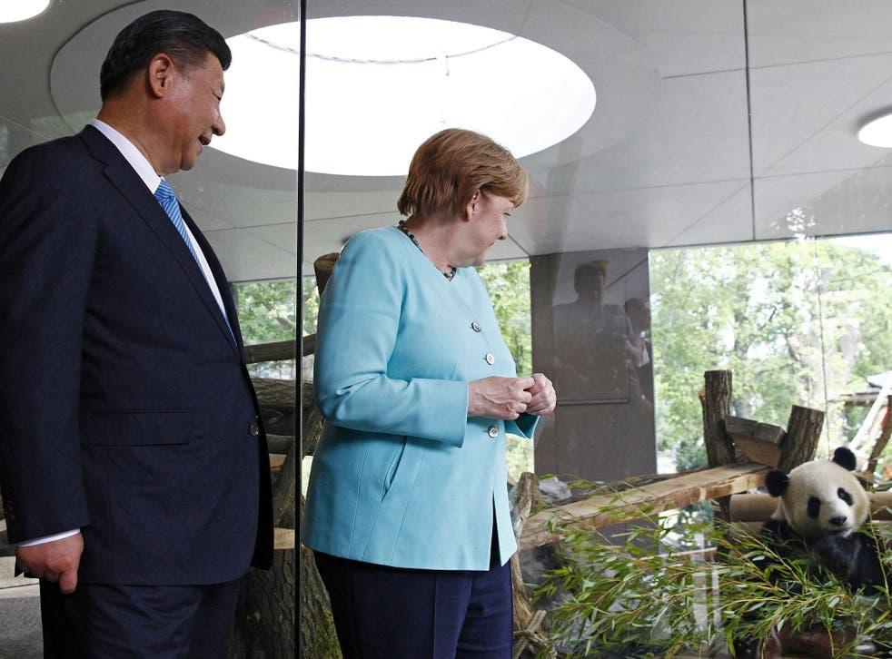 President Ji accompanied Ms Merkel to Berlin Zoo to visit the two pandas