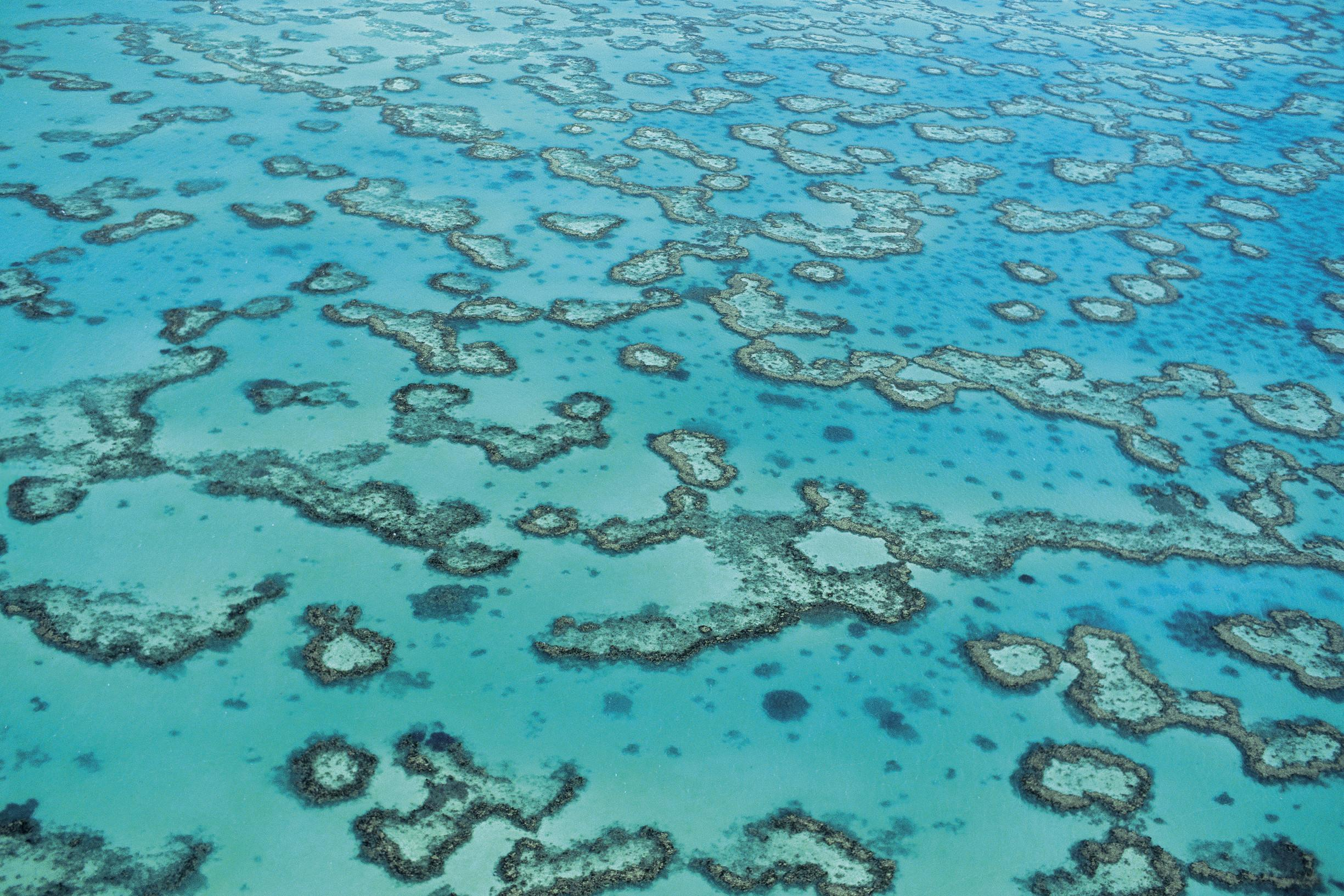 great barrier reef reports of its demise have been exaggerated