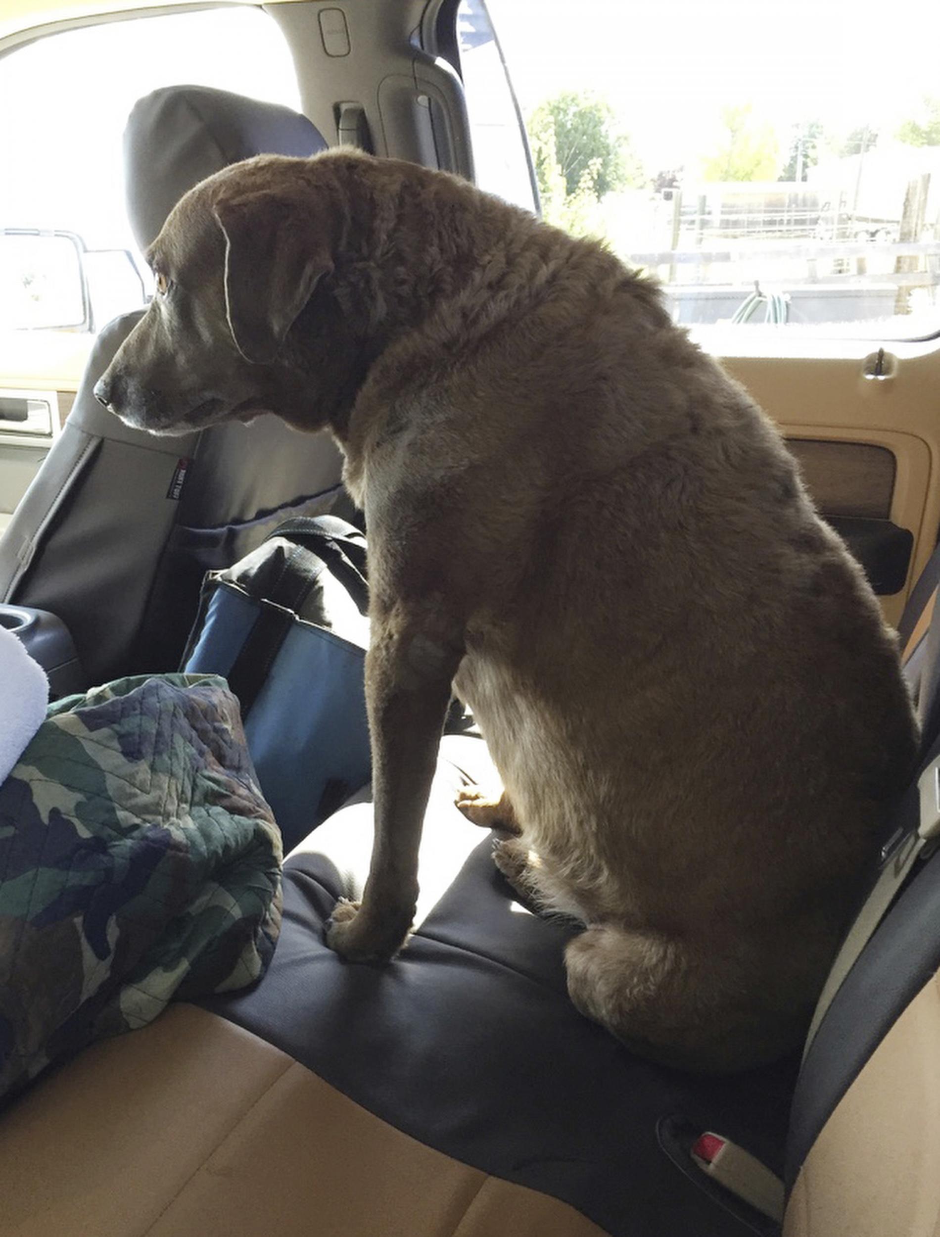 Lost Dog Returns After Surviving 9 Months Of Brutal Weather In