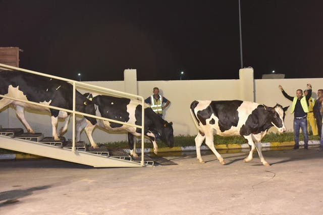 Prior to sanctions, most of Qatar's dairy products came from Saudi Arabia