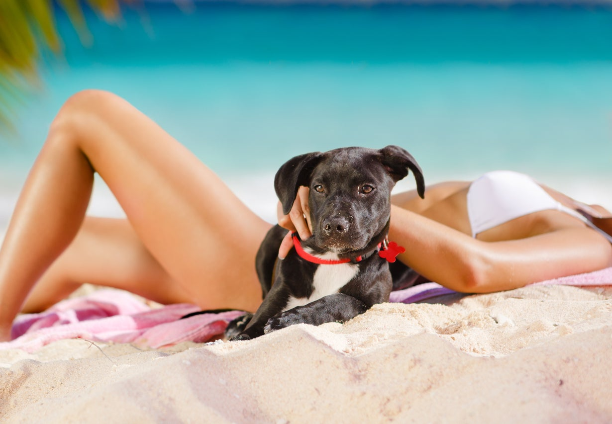 The Caribbean island where you can play with rescue puppies on the beach