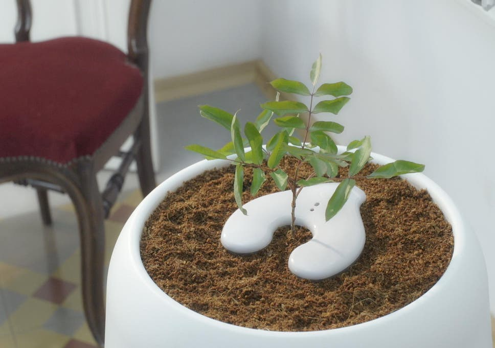 Bios Urn: the startup that lets you grow a tree from human