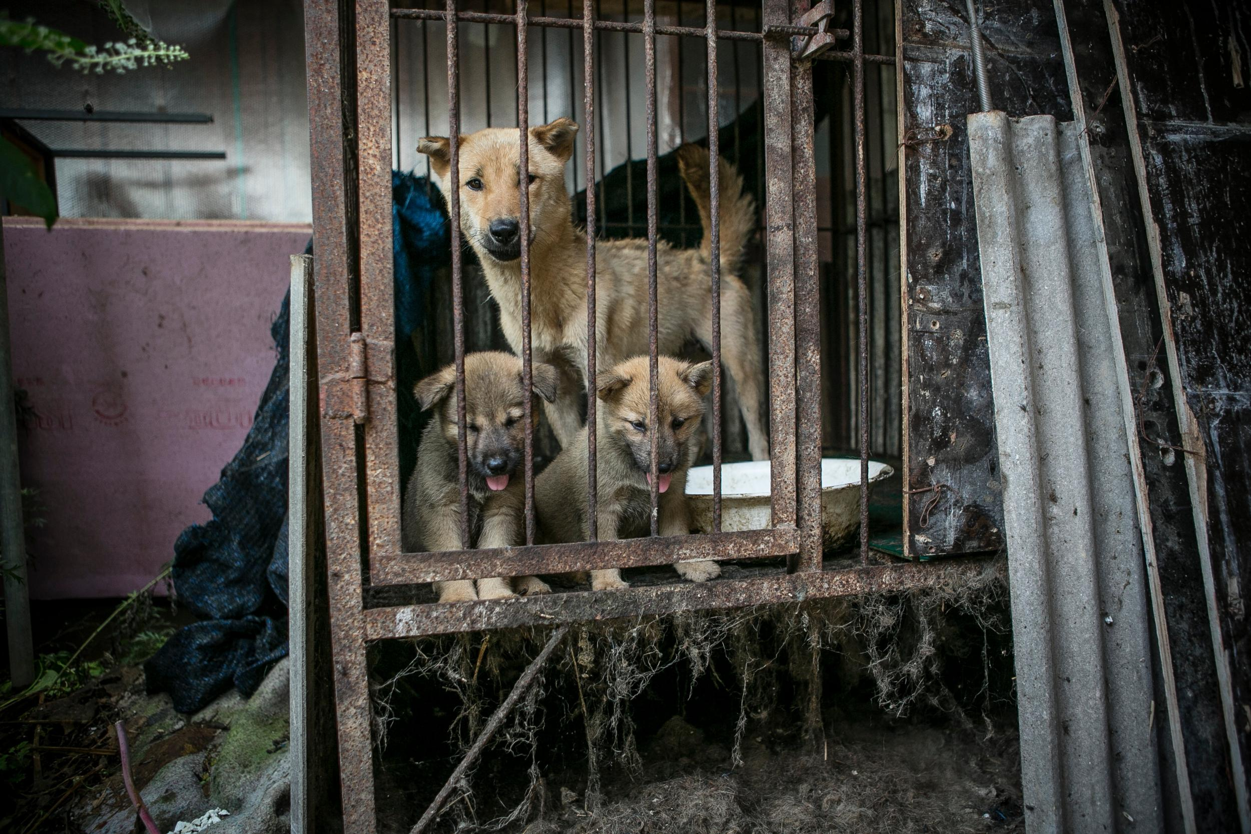 Rescuers Free 149 Dogs Days Before They Are Turned Into Soup · Michael Moore