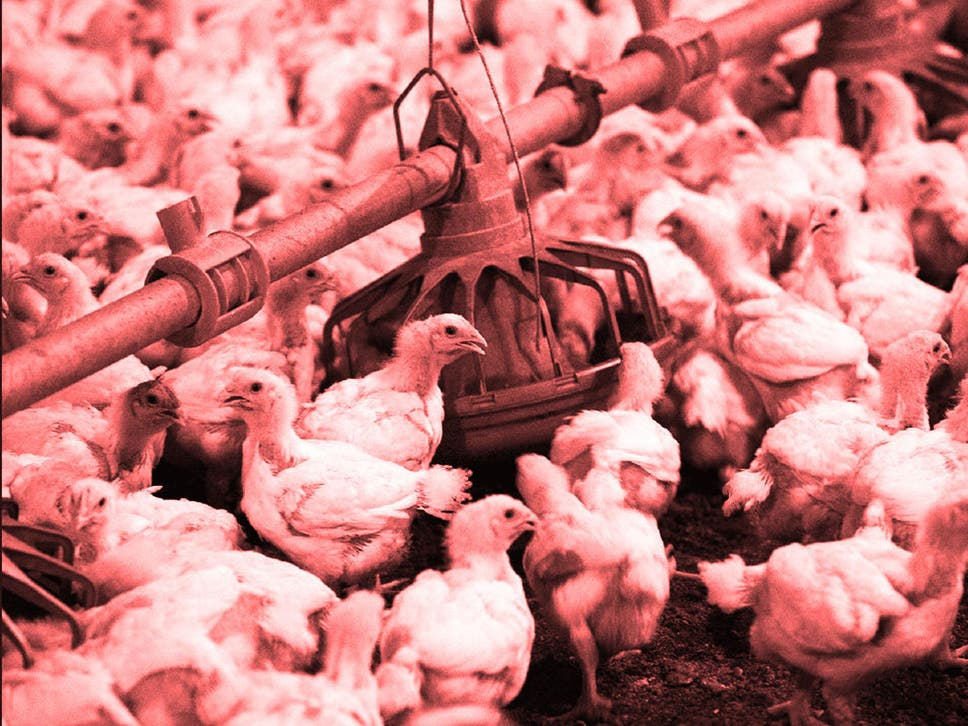 Is chlorinated chicken bad for our health and the