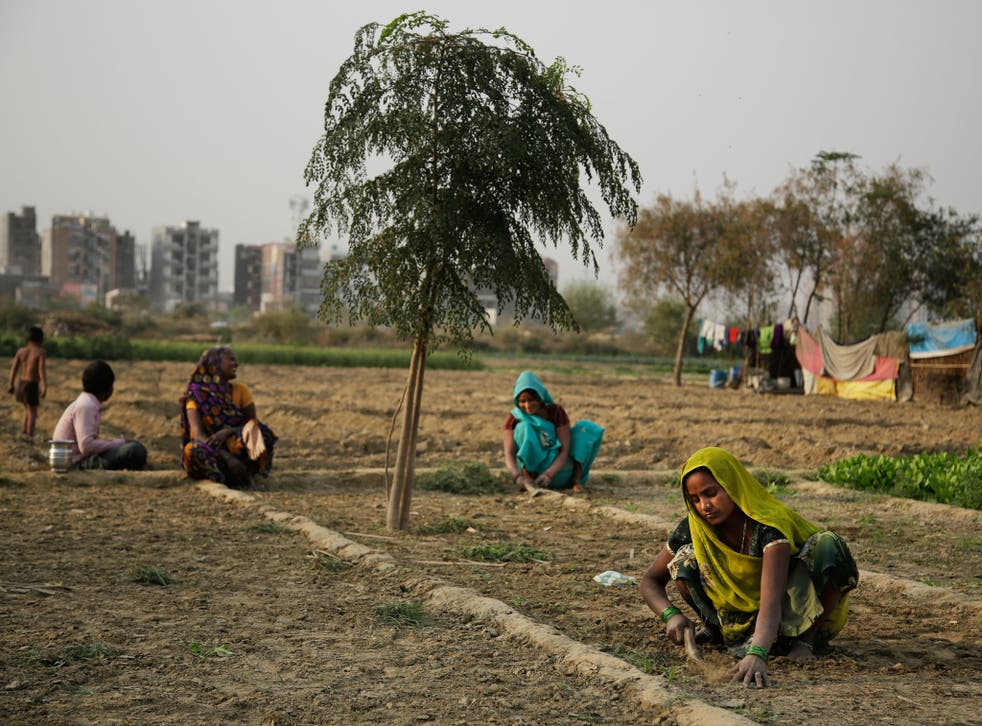 Researchers found a link between crop-damaging temperatures and suicide rates in India